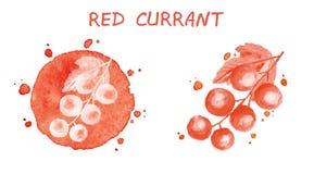 Corrente rossa Illustrazione dell'acquerello Fotografia Stock Libera da Diritti