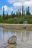 Corrente salmastra bassa del fiume che scorre con il segnale di direzione di & x22; Naturelle& Piscine x22; ai perni del DES di I Immagini Stock Libere da Diritti
