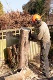 Corrente-sawing uma fatia de tronco de árvore Foto de Stock Royalty Free