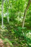 Corrente a secco in Forest Crimean Peninsula immagini stock
