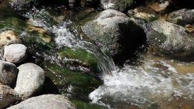 Corrente stretta del colpo che precipita a cascata giù sopra le rocce muscose stock footage