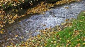 Corrente in un parco di autunno stock footage