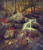 Corrente v della foresta Fotografia Stock