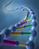 Correntes abstratas do ADN Imagens de Stock