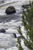 Correntes de pressa macios do rio de Firehole em Yellowstone Nationa Imagem de Stock