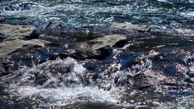 Correnti dell'incrocio del fiume selvaggio con le pietre stock footage