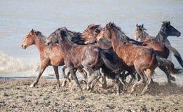 Correre dei cavalli Fotografia Stock Libera da Diritti