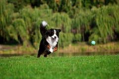 Correre di salto del cane felice alla strada di estate immagini stock libere da diritti