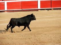 Corrida Photo stock