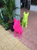 Corrida da cor dos cães de Colorrun Imagens de Stock