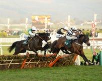 Corrida de cavalos Foto de Stock
