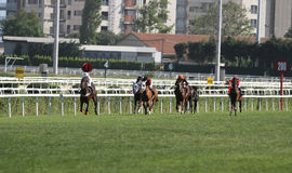 Corrida de cavalos de Istambul Fotografia de Stock Royalty Free