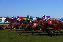 Corrida de cavalos do país fotografia de stock