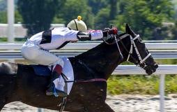 Corrida de cavalos em Pyatigorsk, Cáucaso do norte, Rússia Imagens de Stock