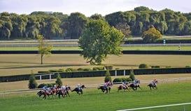 Corrida de cavalos no dia de verão Fotografia de Stock