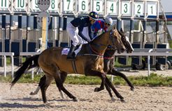 Corrida de cavalos para o prêmio do Imagem de Stock