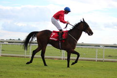 Corrida de cavalos, Yorkshire, Inglaterra Fotos de Stock Royalty Free