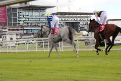 Corrida de cavalos, Yorkshire, Inglaterra Imagem de Stock