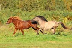 Corrida de los caballos Fotos de archivo