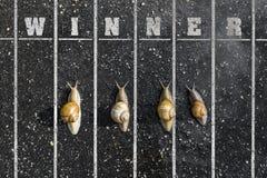 Corrida do caracol, perto do meta, sinal do vencedor na terra Imagens de Stock Royalty Free