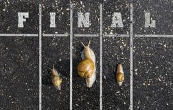 Corrida do caracol, perto do meta, sinal na terra, funn do vencedor Imagens de Stock Royalty Free