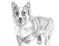 Corrida do corgi do cão do esboço Ilustração do Vetor