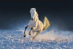 Corrida do garanhão Imagem de Stock Royalty Free