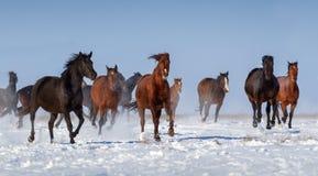 Corrida do rebanho do cavalo Foto de Stock