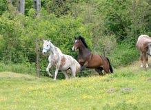 Corrida dos cavalos Fotografia de Stock