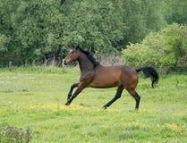 Corrida dos cavalos Fotos de Stock