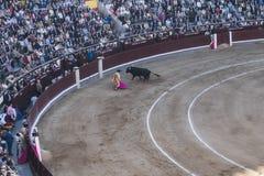 Corrida in Madrid. Bull fight at Madrid`s Plaza de Toros. Madrid , Spain , Europe Stock Photo