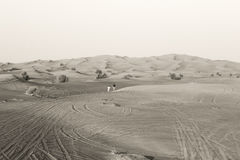 Corrida no deserto Imagens de Stock Royalty Free