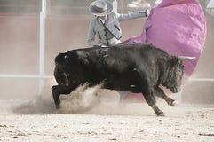 Corrida. Photo de combat de taureau d'Espagne. Taureau noir Image libre de droits