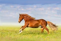 Corrida roja del caballo foto de archivo libre de regalías