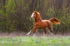 Corrida roja del caballo fotos de archivo