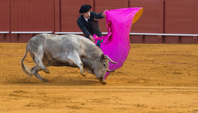 Corrida. Spanish Bullfight Stock Photography