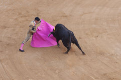 Corrida. A torero playing with the bull during a corrida in spain Royalty Free Stock Photography