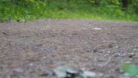 Corridas da mulher ao longo do trajeto na floresta que a câmera dispara de baixo de filme