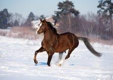 Corridas do cavalo no inverno imagens de stock