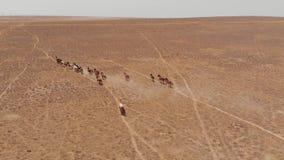 Corridas dos cavalos selvagens através do estepe seco de Cazaquistão video estoque