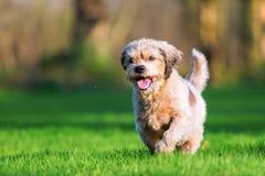 Corridas mais velhas bonitos do cão no prado imagens de stock royalty free