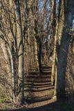 Corridoio asciutto degli alberi Fotografie Stock Libere da Diritti