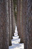Corridoio degli alberi fotografie stock libere da diritti