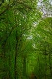 Corridoio naturale costituito dalla ferrovia degli alberi da parte Fotografie Stock