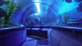 In the corridor of the aquarium underwater. Entertainment for all families. Undersea world