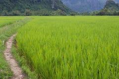 Corridor crops. Stock Photo