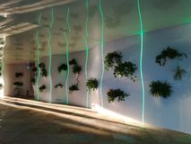 Corridor with decorative flowers at Therme Bucharest. Corridor with decorative flowers and green lights at Therme Bucharest - the sun rays from the left royalty free stock images