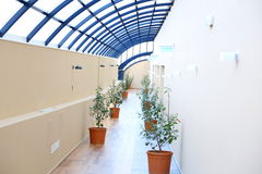 Corridor with flowers. Japanese roses and blue structure roof Stock Images