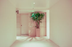 Corridor,houseplant and door Stock Image