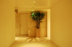 Corridor,houseplant and door Royalty Free Stock Photography